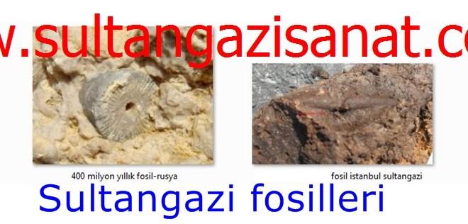 Sultangazi fosilleri