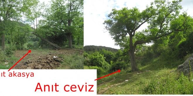 yüzlerce yıllık yaşlı anıt ağaçlar-