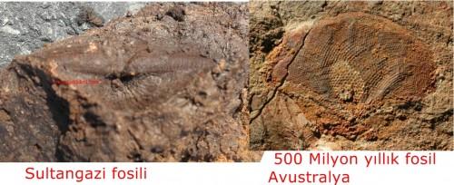 Sultangazi fosili ve 500 Milyon yıllık fosil Avustralya
