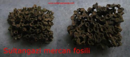 Sultangazi mercan fosili
